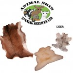 DVD Tanning Deer Hide