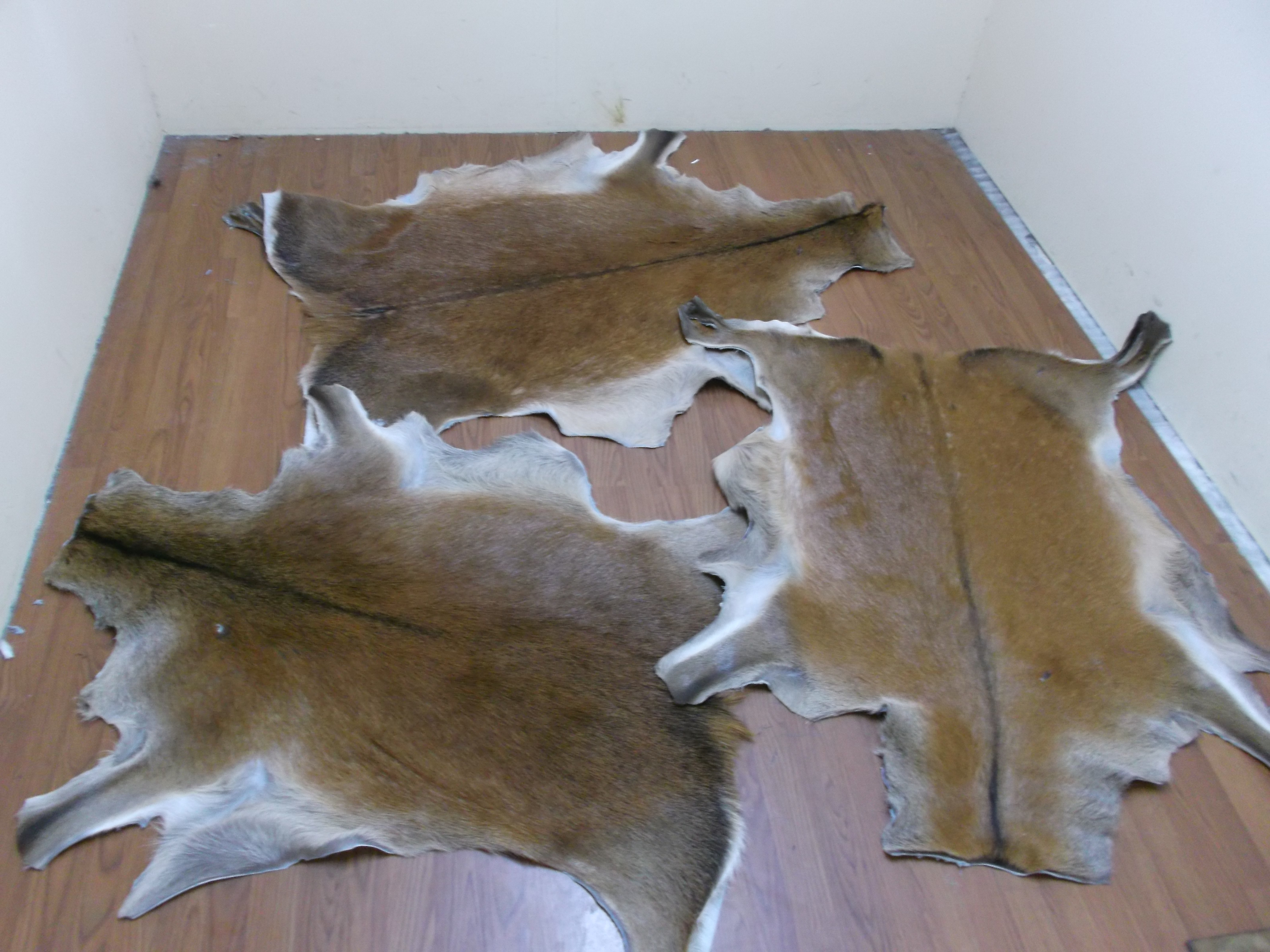 Everything You Need to Know About Tanning Animal Pelts.