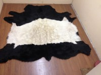 Belted galloway No 389